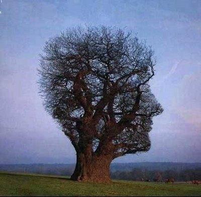 natura.jpg